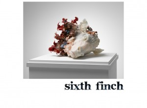 Sixth Finch