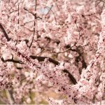 Spring Equinox by Shari Jo LeKane-Yentumi