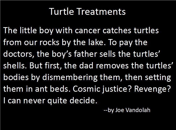 turtletreatments