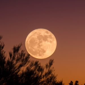 Poem: The Moon by Natalie Crick