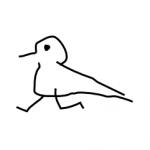 Stupid Bird