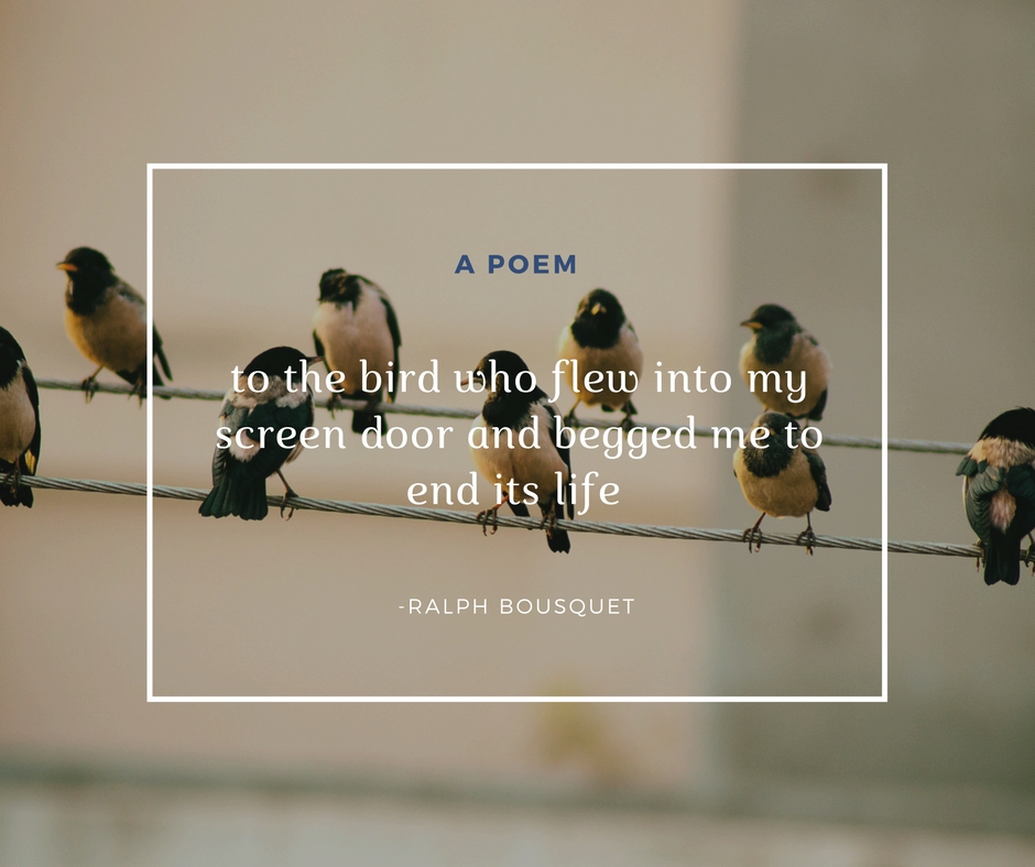 POEM: to the bird who flew into my screen door and begged me to end its life by Ralph Bousquet