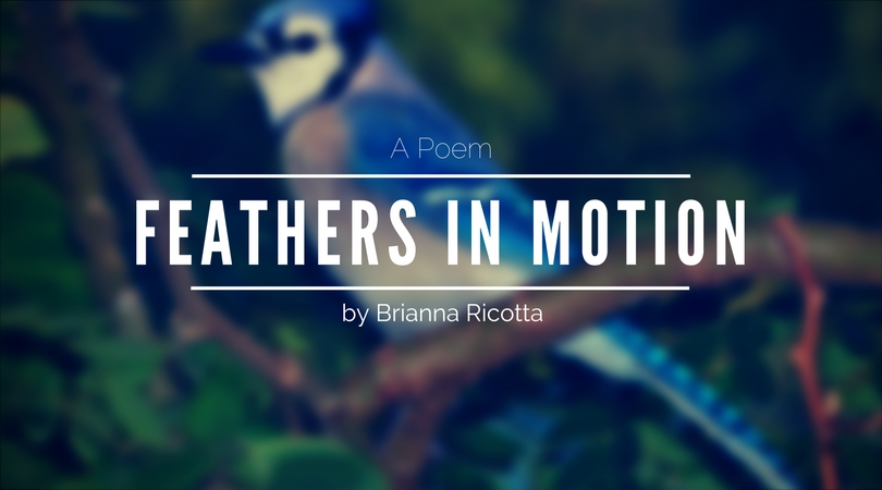 Feathers in Motion by Brianna Ricotta