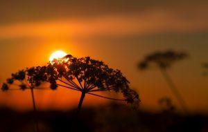Poem: Chirp by Hiram Larew