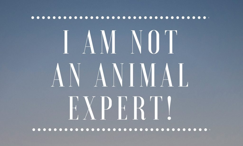 I Am Not An Animal Expert! by Jack London